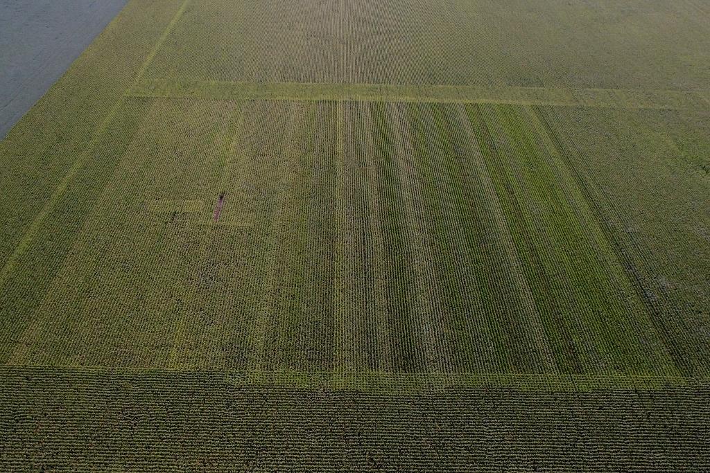 Sprague Corn Hybrid Plot 2017