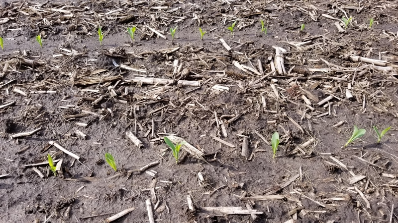 5-30-19 Corn Up