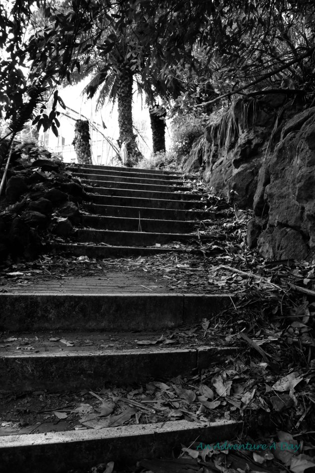 I wasn't sure where these stairs led, but I was running out of sidewalk and they seemed oriented toward the right direction. I battled the dense undergrowth and emerged in a green open space.