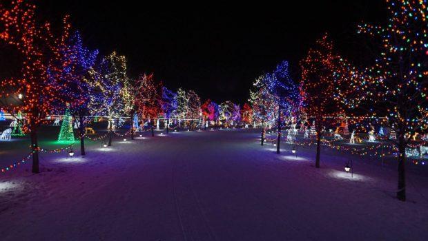 Christmas Light Display Leduc