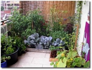 Balcony Vegetable Garden Dubai Garden Design Ideas