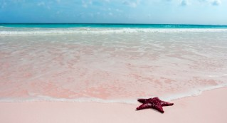 177-bahamas-harbour-island-pinks-sand-beach