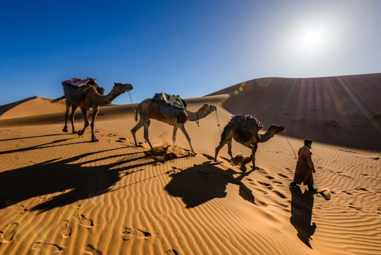 A man walking in the desert with camels