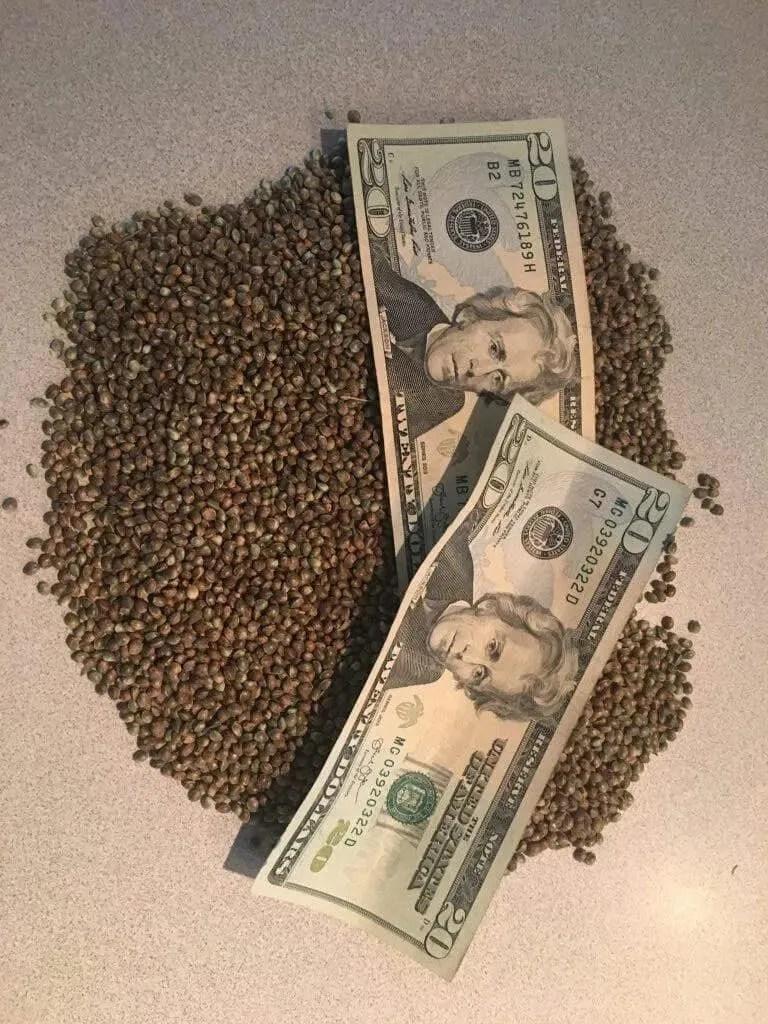 Cannabis Seeds Mean Money