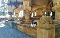 cementiri_de_montjuic_barcelona_cemetery_cats_strays