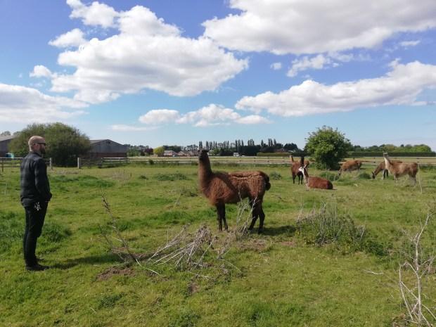 faster lente llama farm wisbech