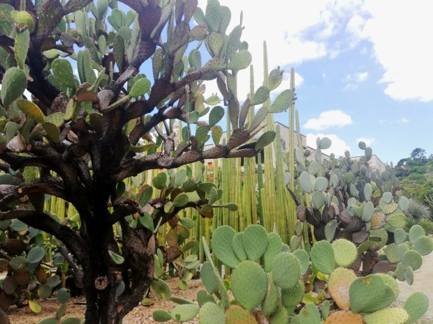 Cacti Oaxaca botanical gardens