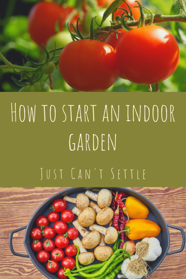 how to start an indoor garden just can't settle