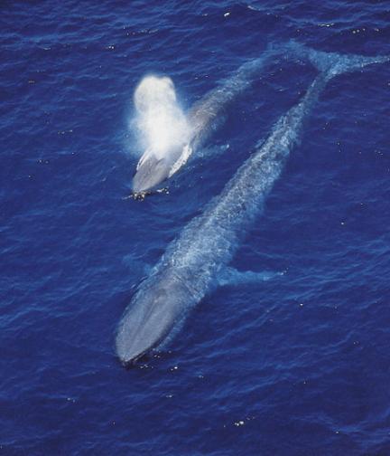 whaleandchild