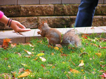 Woman feeding a squirrel near Niagara Falls.
