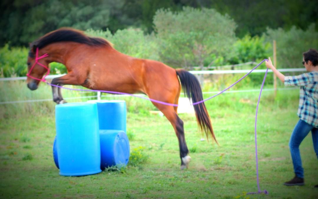 Comment réussir un exercice peut ruiner la progression de mon cheval ?