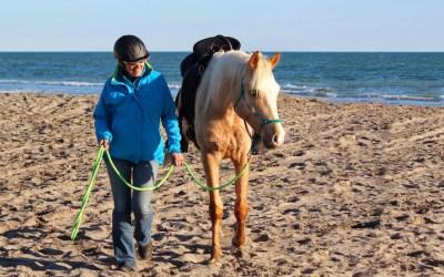 Est ce que le coté où on met le cheval a de l'importance ?
