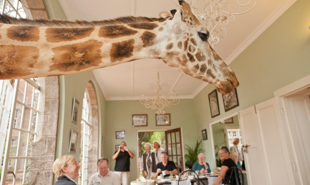 The Safari Collection: Giraffe Manor