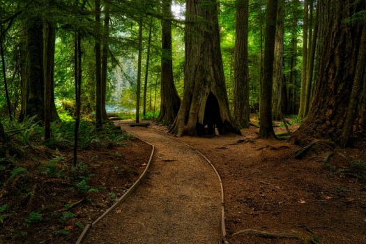 Cathedral Grove Path