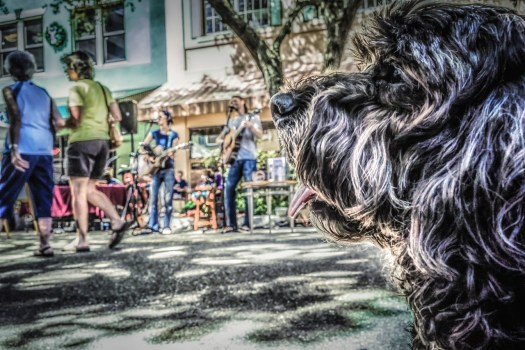 Last weekend I came to the local farmers market with my dogs. It gets pretty hot in the day so I sat down on the sidewalk under a tree across from some local musicians. Sitting there I thought, why not shoot the scene from Wiggle's point of view. So this is the result of that. We sat there for a few minutes listening to the music and enjoying the atmosphere. Then moved on to check out more cool stuff.