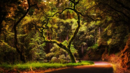 A little over a week ago I got a little lost on my way to Half Moon Bay, but lost in a good way. No schedule, headed for the ocean, just taking it all in. I came upon this tree around a bend and knew I had come to the right place. There is a lot of good energy in the forest.
