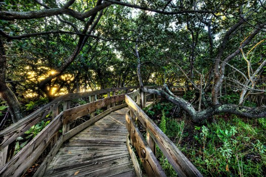 This is a path through the mangroves at a place known as Leffis Key in central Florida. It's a little nature preserve where you can watch all kinds of wildlife and about half of the trails are on these boardwalks. I came here early one morning to capture the rising sun peaking through the mangroves and just to walk along this path to take it all in. It was a warm morning and mostly the birds were about their business starting to fish for a meal. In any case, as I write this I'm about a thousand miles from here and it's below freezing outside; I can't wait to get back to the warm climate and walk again through these mangroves.