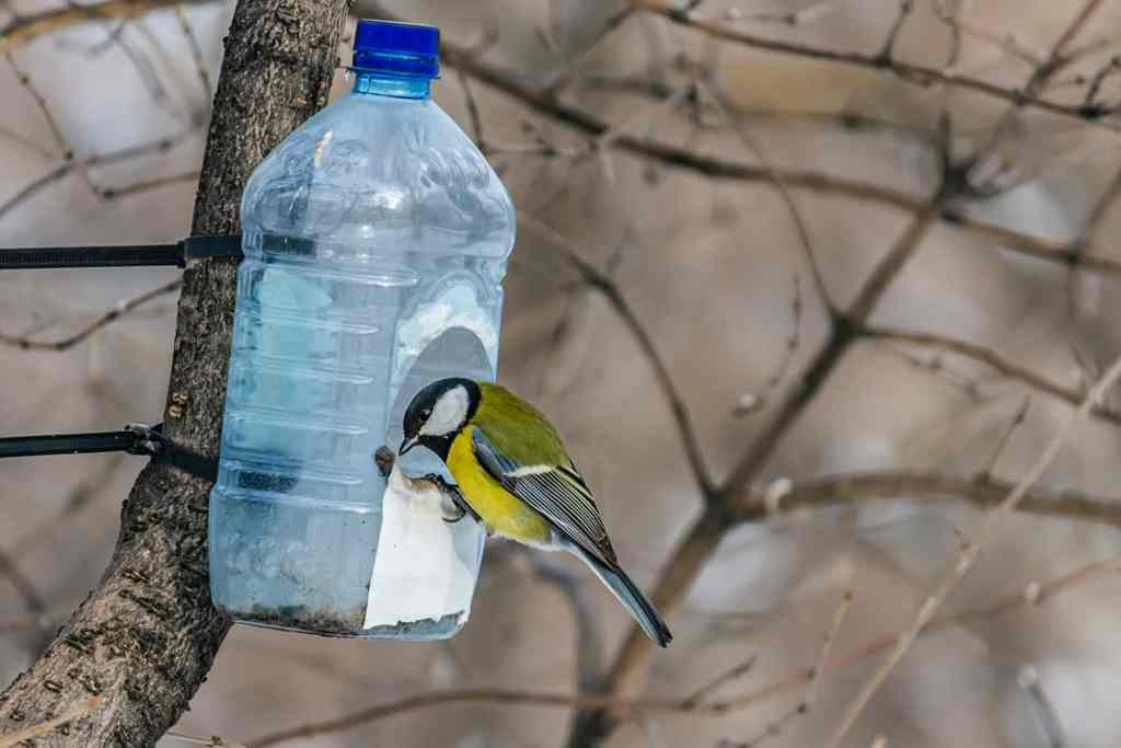 Family Outdoor Activities Bird Feeder