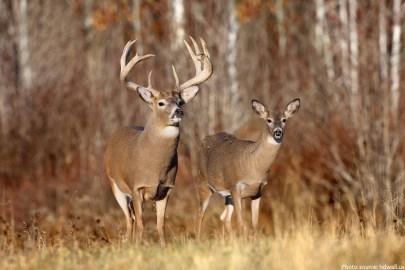 hunter arrows
