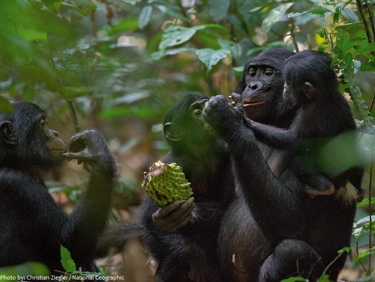 bonobos group