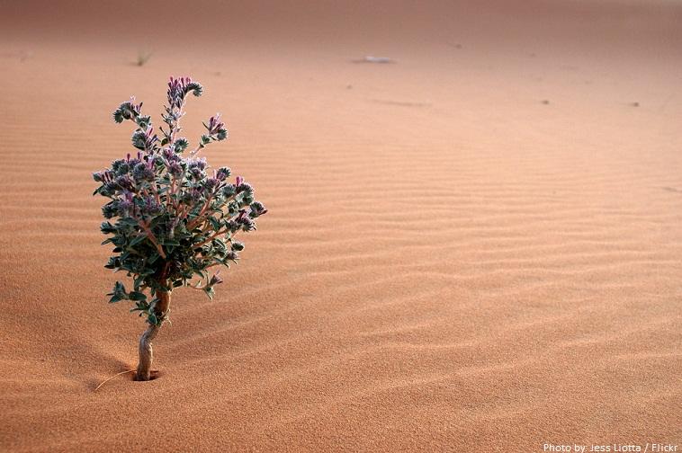 lule shkretëtire