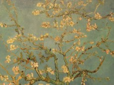 """""""Almond Blossom"""""""