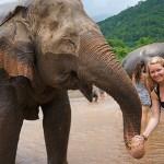 bucketlist olifanten verzorgen