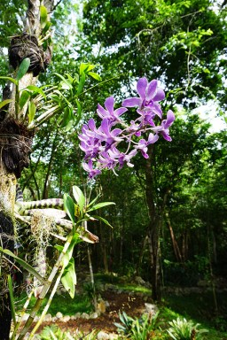Hoyo Azul Dominicaanse Republiek scape park flora fauna