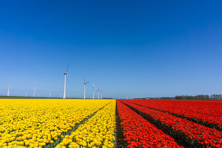 noordoostpolder flevoland tulpenroute rood geel