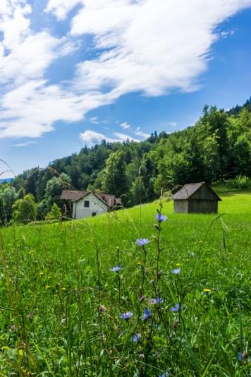 wandelen-meer-van-bled-slovenie