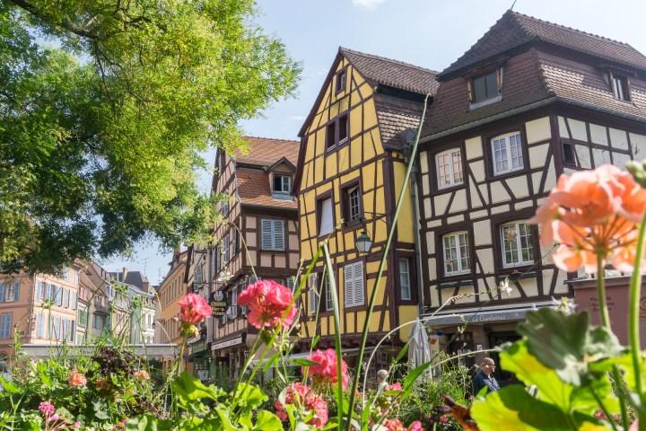 Bloemen in Colmar