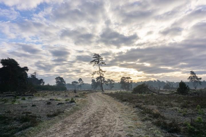 Nationaal Park de Hoge Veluwe: informatie en tips