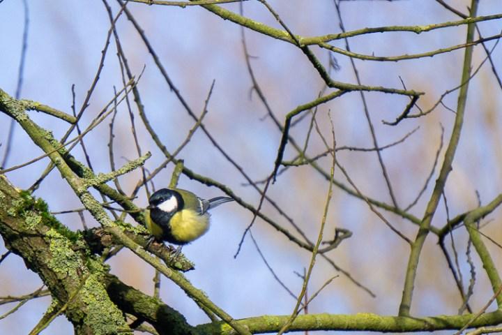 Vogels spotten bij Nieuw Land.