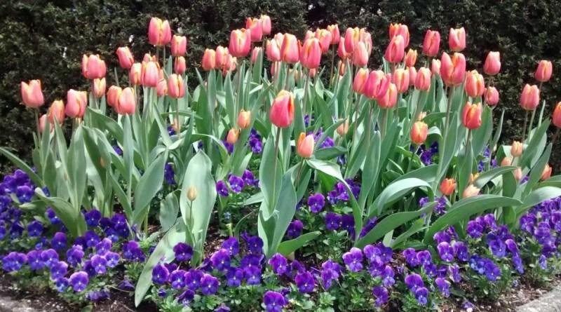 Spring floral cornucopia