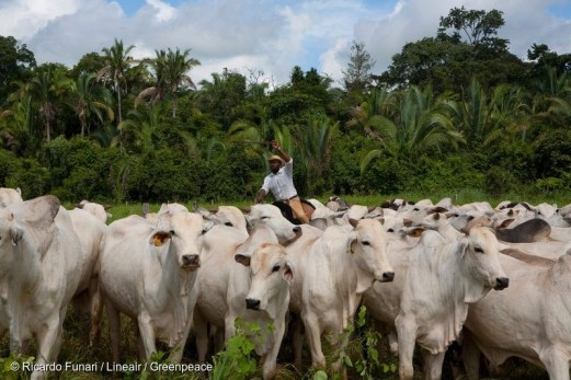 Slave Cattle