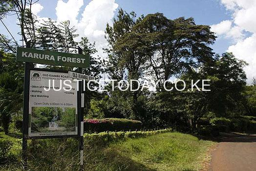 Karura forest's old trees to be cut down to pave way for mega sewer line