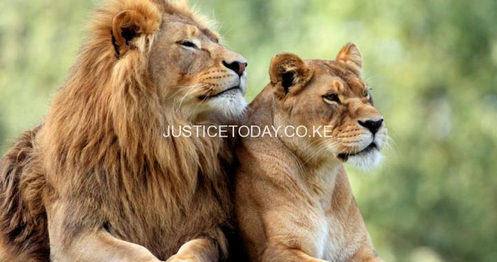 """Public health risks from """"The Sick 5"""" go unchecked in captive lion breeding industry"""