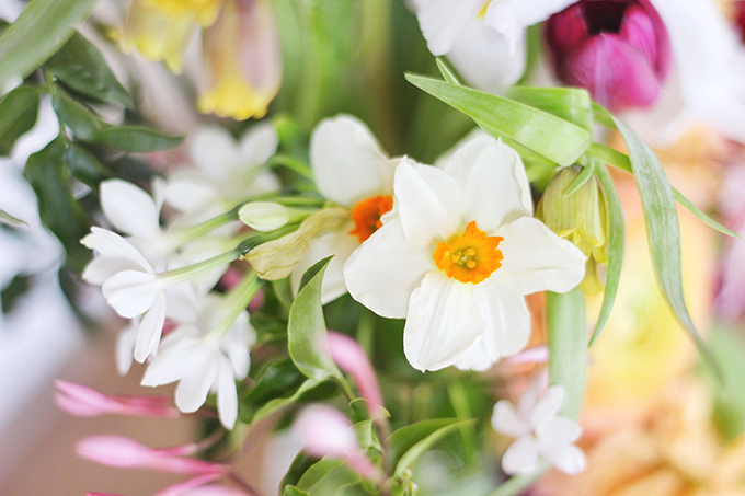 An Introduction to Spring Flowers | Narcissus // JustineCelina.com