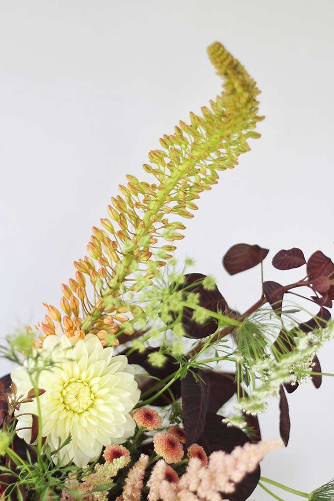 An Introduction to Autumn Flowers | Thlaspi // JustineCelina.com x Rebecca Dawn Design