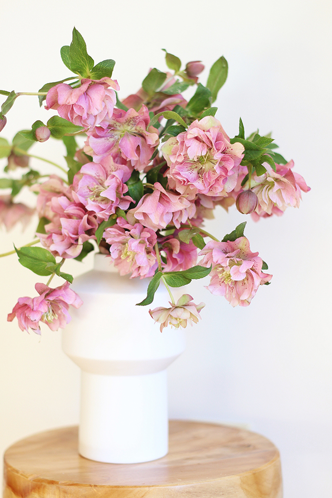 DIY | Homemade Flower Food | Double Bloom Hellebore Arrangement // JustineCelina.com