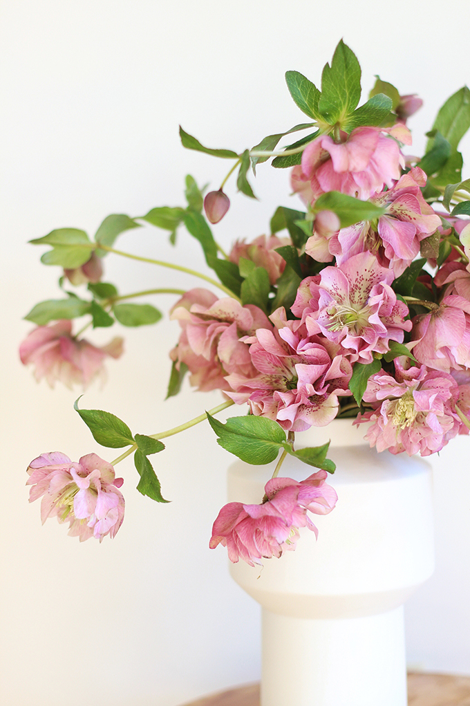 Homemade Flower Food Recipe | Double Bloom Hellebores // JustineCelina.com