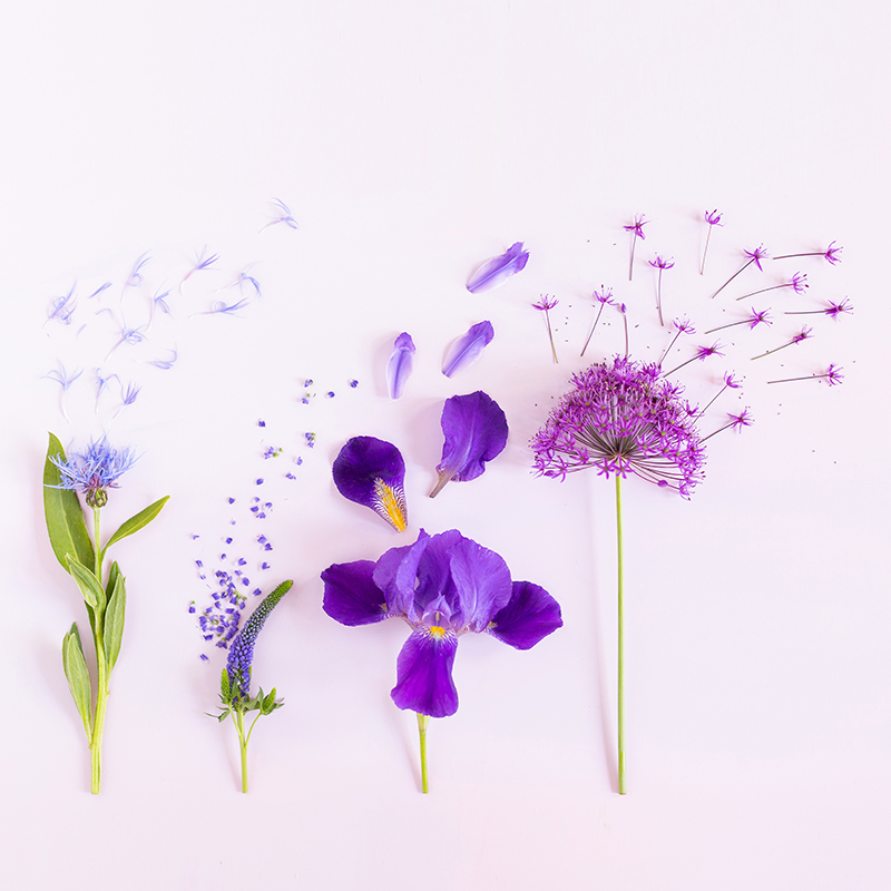 Digital Blooms July 2018   Free Pantone 2018 Colour of the Year Inspired Desktop Wallpapers for Spring and Summer   Free Bright Summer Floral Wallpapers   Design 2 // JustineCelina.com x Rebecca Dawn Design