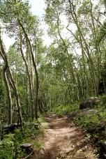 ArapahoeNationalForest
