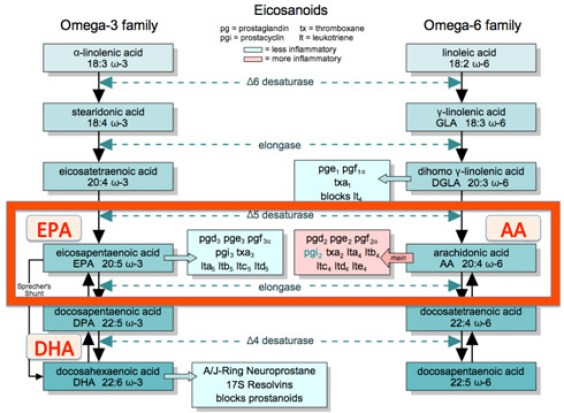 EPA-Fish-OIl_eicosanoid-pathway