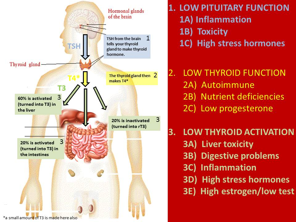 Thyroid Imbalances And What You Need To Do About It Just In Health