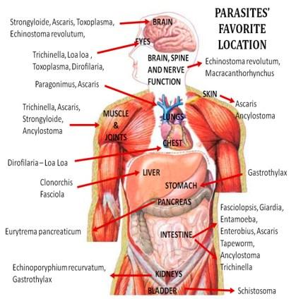 parasites locations
