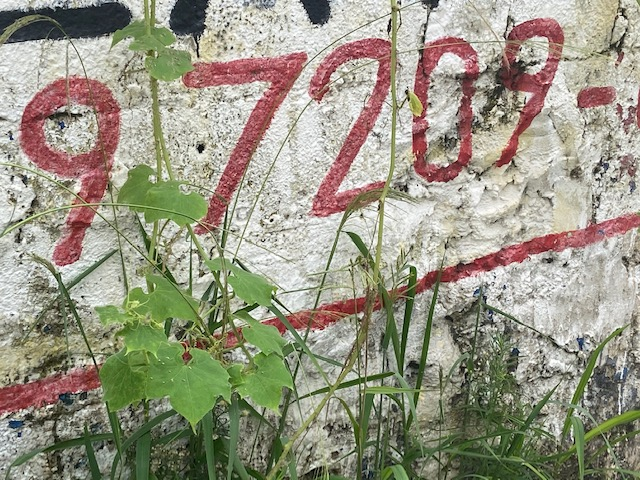 Jardim das Delícias - 11, Justino, fotografia, 2020.