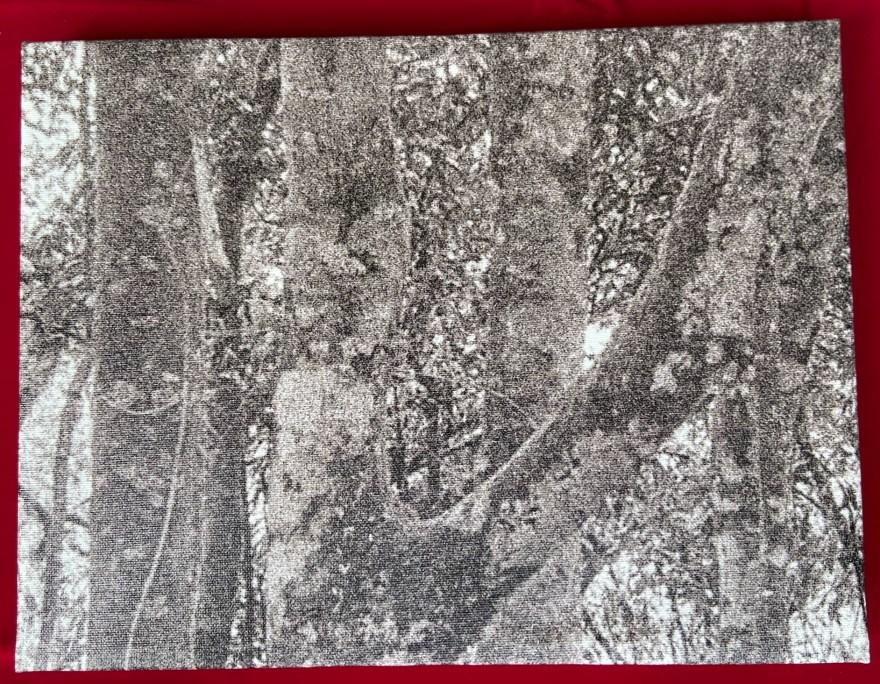 """""""Mantiqueira - 10"""", Justino, Fotografia digital impressa em tela, 30 cm x 40 cm, 2021."""