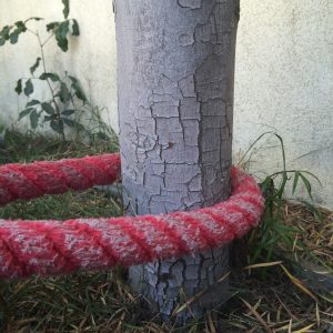 Red battle rope anchored around a tree