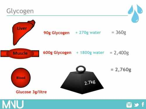 Glycogen and water retentiong